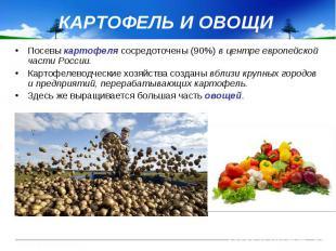 КАРТОФЕЛЬ И ОВОЩИ Посевы картофеля сосредоточены (90%) в центре европейской част