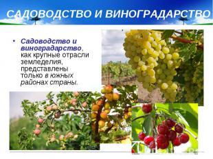 САДОВОДСТВО И ВИНОГРАДАРСТВО Садоводство и виноградарство, как крупные отрасли з