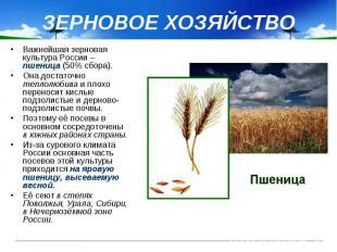 ЗЕРНОВОЕ ХОЗЯЙСТВО Важнейшая зерновая культура России – пшеница (50% сбора). Она