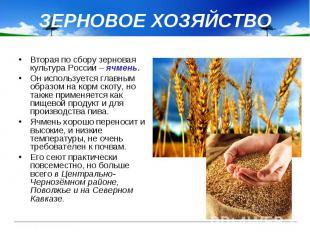 ЗЕРНОВОЕ ХОЗЯЙСТВО Вторая по сбору зерновая культура России – ячмень. Он использ