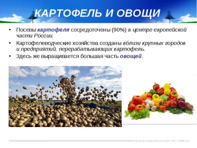 КАРТОФЕЛЬ И ОВОЩИ Посевы картофеля сосредоточены (90%) в центре европейской части России. Картофелеводческие хозяйства созданы вблизи крупных городов и предприятий, перерабатывающих картофель. Здесь же выращивается большая часть овощей.