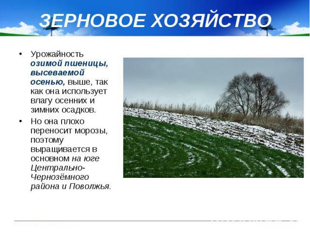 ЗЕРНОВОЕ ХОЗЯЙСТВО Урожайность озимой пшеницы, высеваемой осенью, выше, так как она использует влагу осенних и зимних осадков. Но она плохо переносит морозы, поэтому выращивается в основном на юге Центрально-Чернозёмного района и Поволжья.