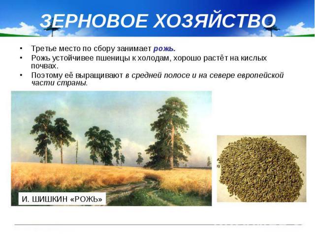 ЗЕРНОВОЕ ХОЗЯЙСТВО Третье место по сбору занимает рожь. Рожь устойчивее пшеницы к холодам, хорошо растёт на кислых почвах. Поэтому её выращивают в средней полосе и на севере европейской части страны.