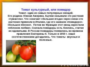 Томат культурный, или помидор Томат- один из самых популярных овощей. Его родина
