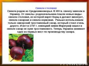 Свекла столовая Свекла родом из Средиземноморья. В XΙV в. свеклу завезли в Украи