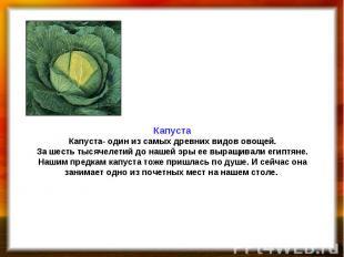 Капуста Капуста- один из самых древних видов овощей. За шесть тысячелетий до наш