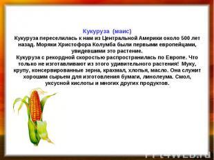 Кукуруза (маис) Кукуруза переселилась к нам из Центральной Америки около 500 лет