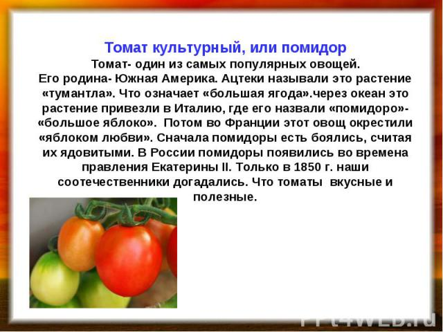 Томат культурный, или помидор Томат- один из самых популярных овощей. Его родина- Южная Америка. Ацтеки называли это растение «тумантла». Что означает «большая ягода».через океан это растение привезли в Италию, где его назвали «помидоро»- «большое я…