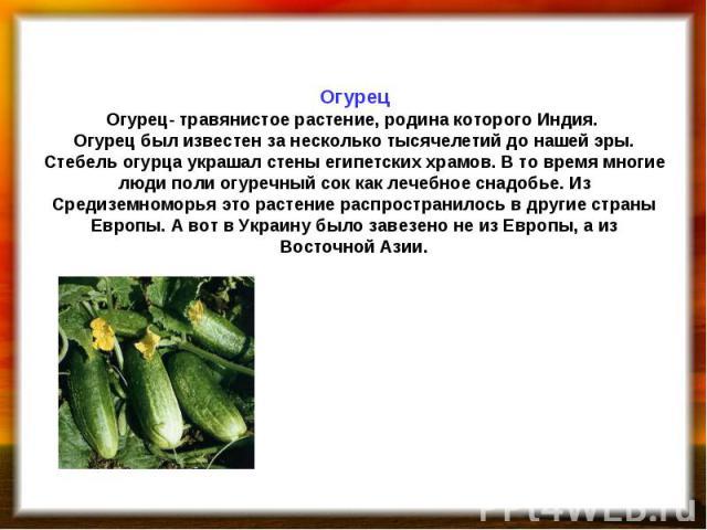 Огурец Огурец- травянистое растение, родина которого Индия. Огурец был известен за несколько тысячелетий до нашей эры. Стебель огурца украшал стены египетских храмов. В то время многие люди поли огуречный сок как лечебное снадобье. Из Средиземноморь…