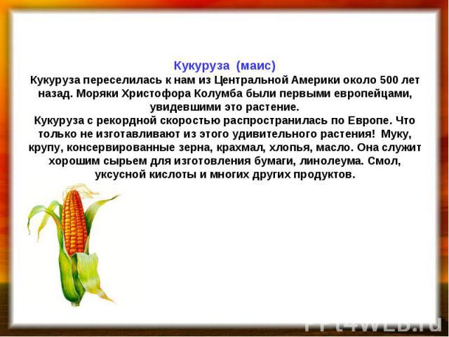 Кукуруза (маис) Кукуруза переселилась к нам из Центральной Америки около 500 лет назад. Моряки Христофора Колумба были первыми европейцами, увидевшими это растение. Кукуруза с рекордной скоростью распространилась по Европе. Что только не изготавлива…