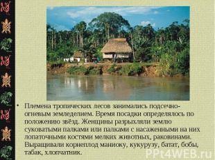 Племена тропических лесов занимались подсечно-огневым земледелием. Время посадки