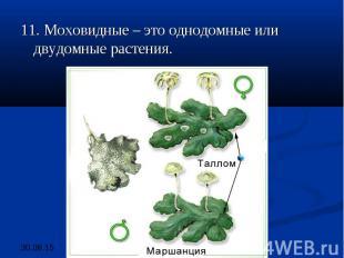 11. Моховидные – это однодомные или двудомные растения. 11. Моховидные – это одн