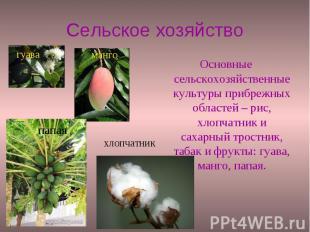 Сельское хозяйство Основные сельскохозяйственные культуры прибрежных областей –