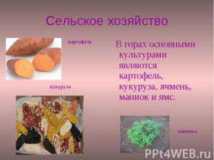 Сельское хозяйство В горах основными культурами являются картофель, кукуруза, яч