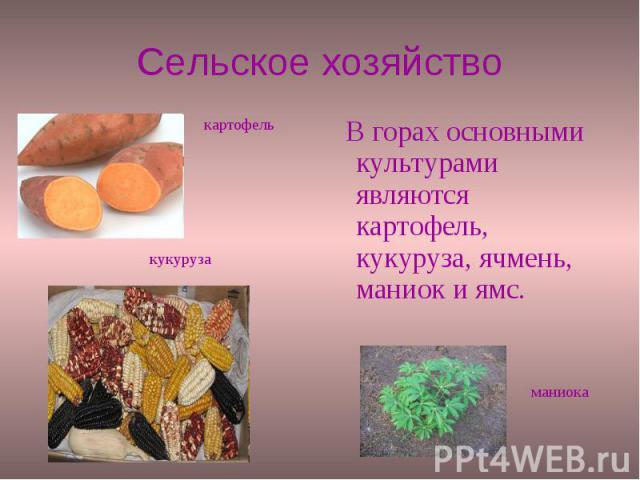 Сельское хозяйство В горах основными культурами являются картофель, кукуруза, ячмень, маниок и ямс.