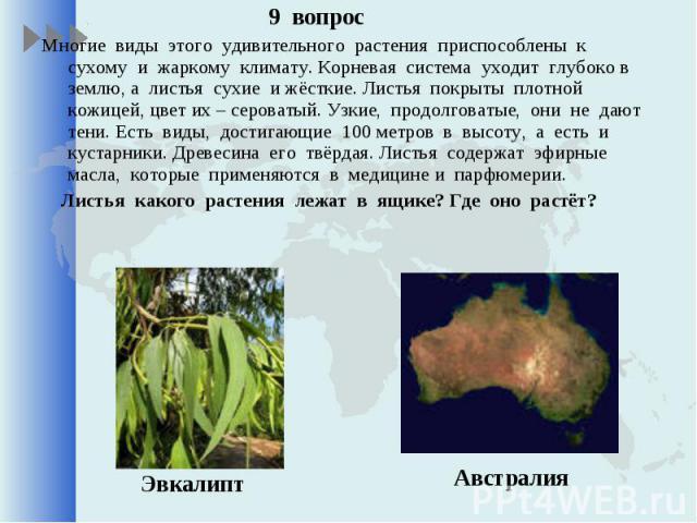 9 вопрос 9 вопрос Многие виды этого удивительного растения приспособлены к сухому и жаркому климату. Корневая система уходит глубоко в землю, а листья сухие и жёсткие. Листья покрыты плотной кожицей, цвет их – сероватый. Узкие, продолговатые, они не…