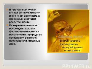В прозрачных кусках янтаря обнаруживаются включения ископаемых насекомых и остат