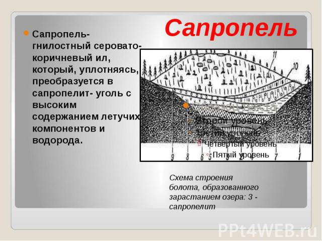 Сапропель Сапропель- гнилостный серовато- коричневый ил, который, уплотняясь, преобразуется в сапропелит- уголь с высоким содержанием летучих компонентов и водорода.