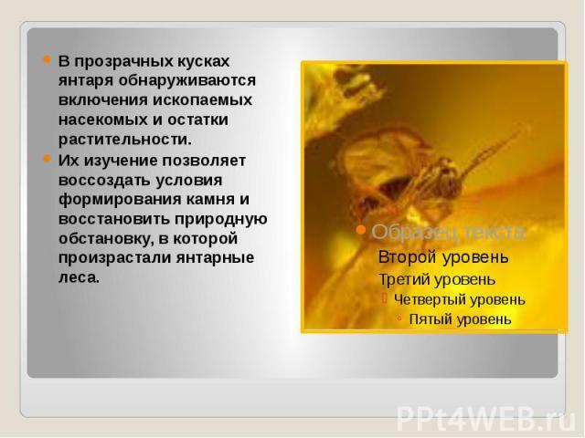 В прозрачных кусках янтаря обнаруживаются включения ископаемых насекомых и остатки растительности. Их изучение позволяет воссоздать условия формирования камня и восстановить природную обстановку, в которой произрастали янтарные леса.