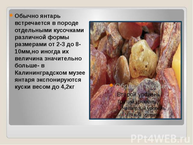 Обычно янтарь встречается в породе отдельными кусочками различной формы размерами от 2-3 до 8-10мм,но иногда их величина значительно больше- в Калининградском музее янтаря экспонируются куски весом до 4,2кг