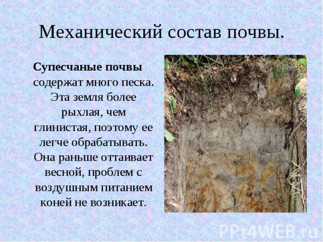 Механический состав почвы. Супесчаные почвы содержат много песка. Эта земля более рыхлая, чем глинистая, поэтому ее легче обрабатывать. Она раньше оттаивает весной, проблем с воздушным питанием коней не возникает.
