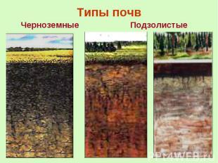 Типы почв Черноземные
