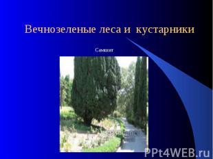 Вечнозеленые леса и кустарники