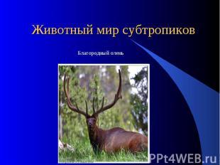 Животный мир субтропиков