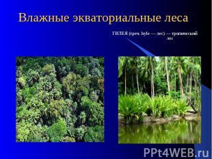 Влажные экваториальные леса ГИЛЕЯ (греч. hyle — лес) — тропический лес