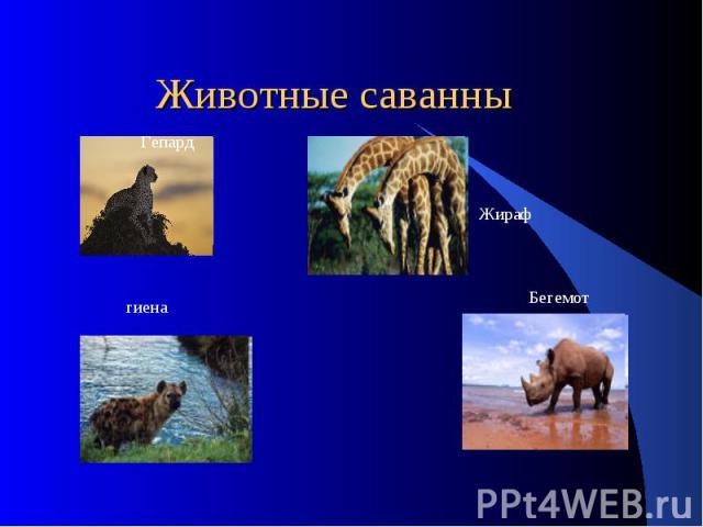 Животные саванны