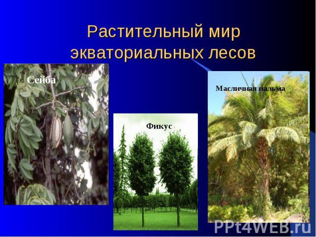 Растительный мир экваториальных лесов