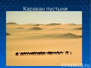 Караван пустыни