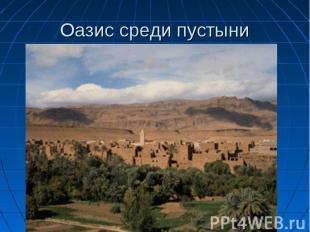 Оазис среди пустыни