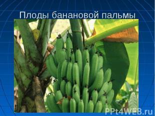 Плоды банановой пальмы