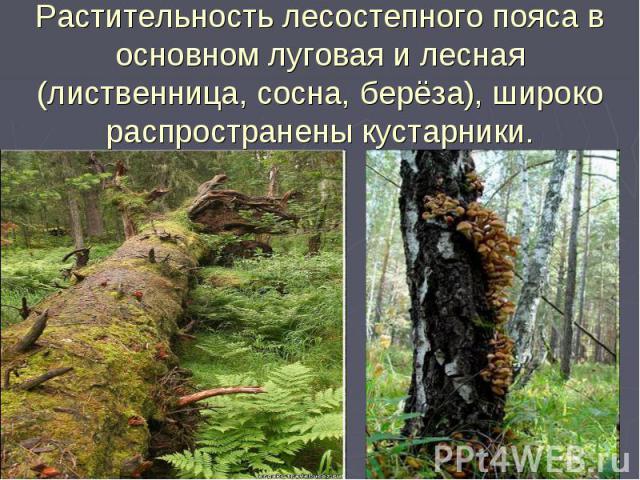 Растительность лесостепного пояса в основном луговая и лесная (лиственница, сосна, берёза), широко распространены кустарники.