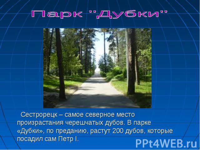 Сестрорецк – самое северное место произрастания черешчатых дубов. В парке «Дубки», по преданию, растут 200 дубов, которые посадил сам Петр I.