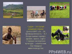 Судан – отсталая аграрная страна. Доля в ВВП: с/х – 36, промышленность – 8.2 Воз
