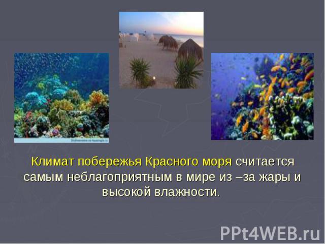 Климат побережья Красного моря считается самым неблагоприятным в мире из –за жары и высокой влажности.