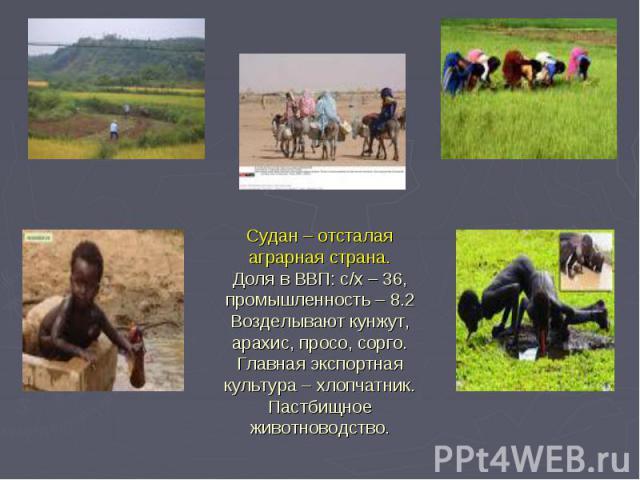 Судан – отсталая аграрная страна. Доля в ВВП: с/х – 36, промышленность – 8.2 Возделывают кунжут, арахис, просо, сорго. Главная экспортная культура – хлопчатник. Пастбищное животноводство.