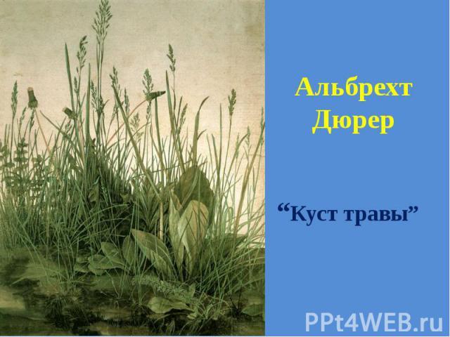 """Альбрехт Дюрер """"Куст травы"""""""