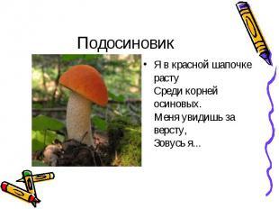 Подосиновик Я в красной шапочке расту Среди корней осиновых. Меня увидишь за вер