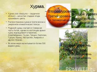 Хурма. Хурма (лат. diaspyros – сердечное яблоко) – мясистая сладкая ягода оранже