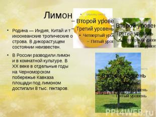 Лимон. Родина—Индия,Китайитихоокеанскиетропи