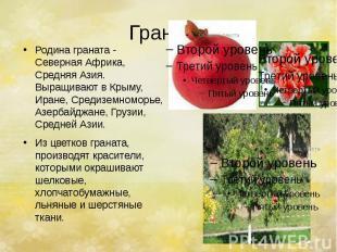 Гранат. Родина граната - Северная Африка, Средняя Азия. Выращивают в Крыму, Иран