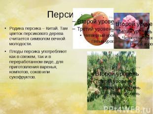 Персик. Родина персика – Китай. Там цветок персикового дерева считается символом