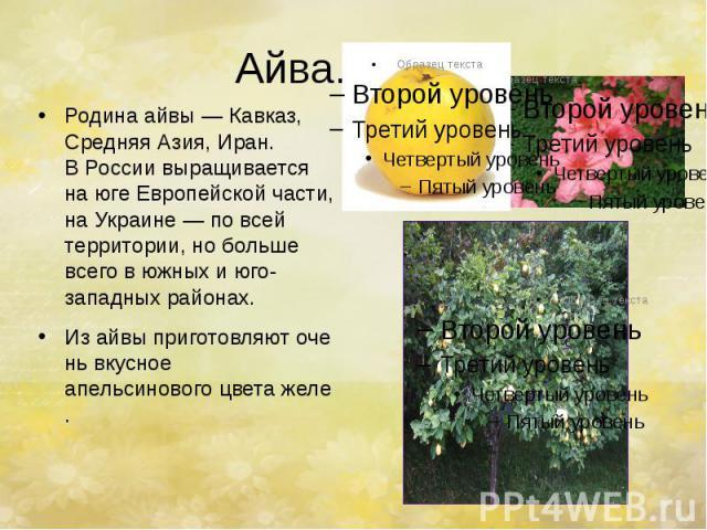 Айва. Родина айвы— Кавказ, Средняя Азия, Иран. ВРоссии выращивается наюге Европейской части, наУкраине— повсей территории, нобольше всего вюжных июго-западных районах. Изайвыприготовл…