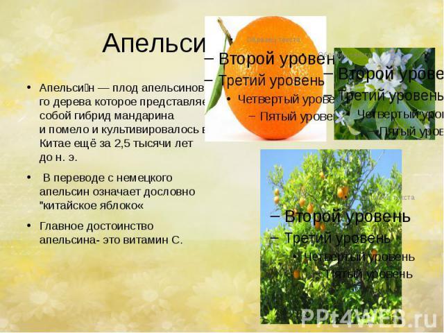 Апельсин. Апельси н—плодапельсинового деревакоторое представляет собойгибридмандарина ипомело и культивировалось в Китаеещё за 2,5 тысячи лет дон.э. В переводе с немецкого апель…