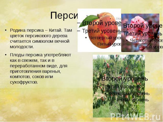 Персик. Родина персика – Китай. Там цветок персикового дерева считается символом вечной молодости. Плоды персика употребляют как в свежем, так и в переработанном виде, для приготовления варенья, компотов, соков или сухофруктов.