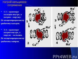 Натрий-кальциевое сопряжение 1-2 – транспорт кальция внутрь, а натрия – наружу;