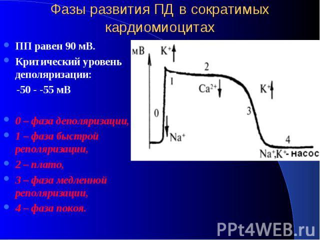 Фазы развития ПД в сократимых кардиомиоцитах ПП равен 90 мВ. Критический уровень деполяризации: -50 - -55 мВ 0 – фаза деполяризации, 1 – фаза быстрой реполяризации, 2 – плато, 3 – фаза медленной реполяризации, 4 – фаза покоя.